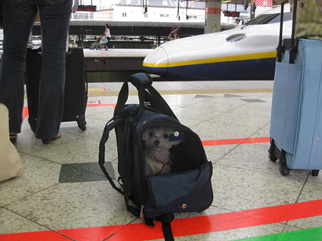 新幹線に乗りましたよ