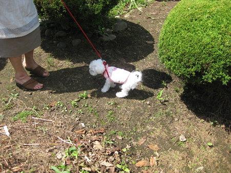 お庭散策中