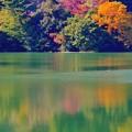 写真: 秋の彩り