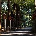 写真: お礼参り(椿大神社)