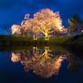 浅井の一本桜 2