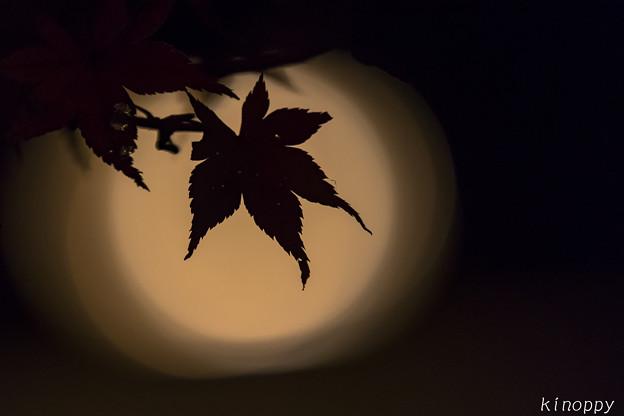 御船山楽園 紅葉 ライトアップ 8