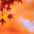 興山園 紅葉 4