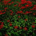 Photos: Red & Green
