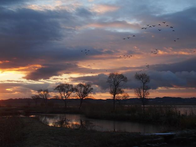 写真: 朝焼けの空を