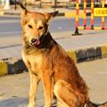 写真: 野良犬