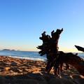 写真: 流木