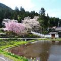 1358 宮谷の桜