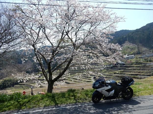 写真: DSCN1863 坂折の棚田にて