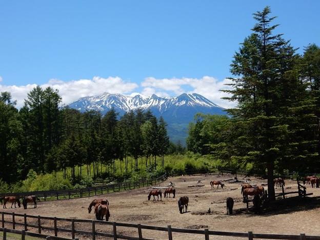 写真: 10 木曽駒と御嶽