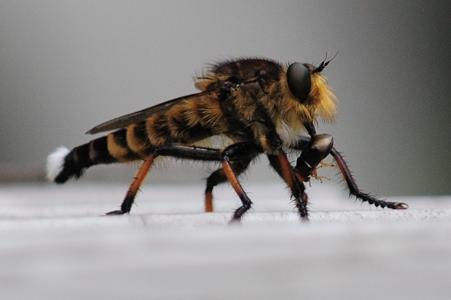 獲物をしっかり確保している獰猛な昆虫