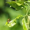 Photos: ハチの日常