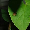 写真: 不思議な昆虫