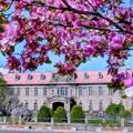 写真: 旧札幌控訴院の春~♪
