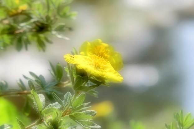 写真: 暑い日・小川の畔に咲く~♪