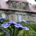 写真: 石造りの館と紫陽花~♪