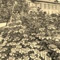 写真: 大正ロマンの館・レトロはセピアで~♪