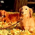 写真: 銀杏の絨毯の上で~♪