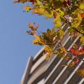 空に一番近い秋
