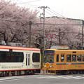 Photos: 2017年4月、飛鳥山にて…(1)