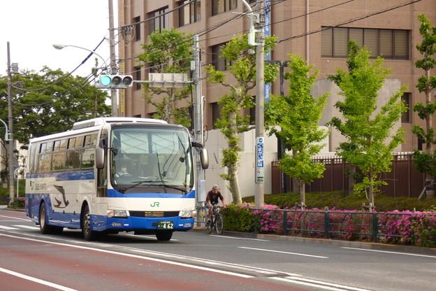 Photos: 沿道のツツジは花を咲かせて「応援」!?