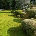 写真: 優しい緑