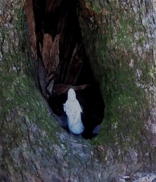 67 下山路のブナの洞におかれているのは??