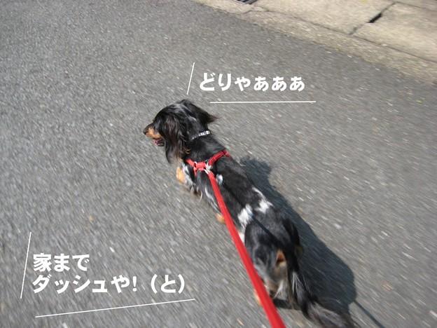 写真: senna0334