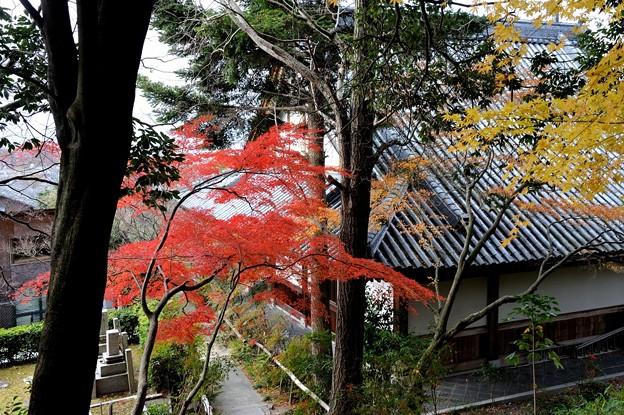 石峰寺五百羅漢 2010/12/12 12:34