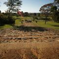 Photos: 多賀城政庁跡から延びる古代道路