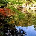写真: 金亀池