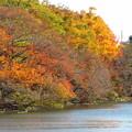 写真: 公園の紅葉
