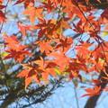 写真: 山の紅葉