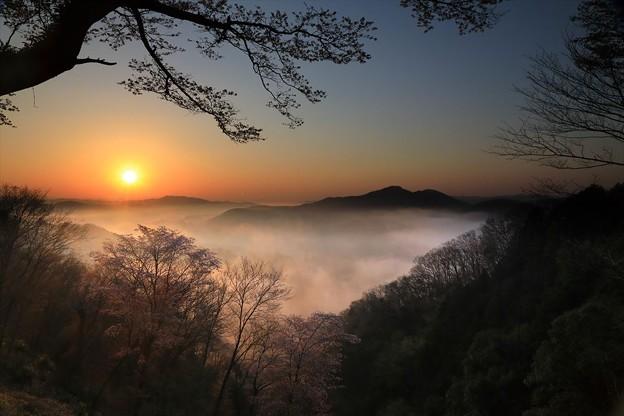 写真: 春の夜明け♪