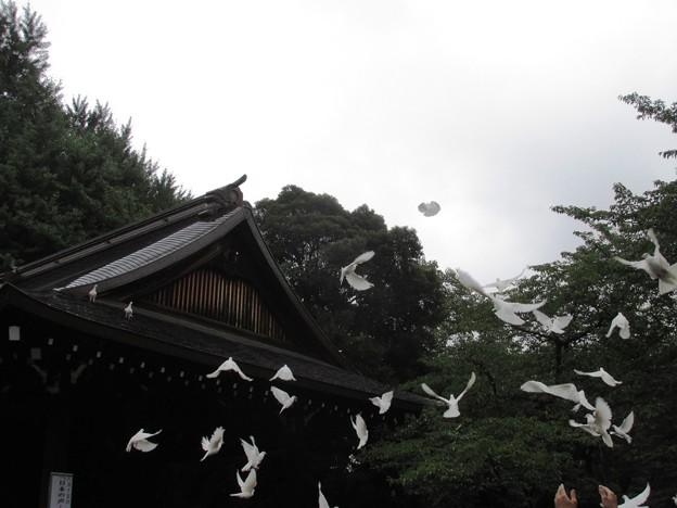 04能楽堂鳩放鳥