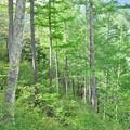 写真: 林の中で