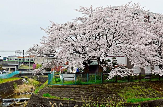 春色沿線15