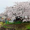 Photos: 春色沿線15