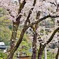 写真: 春色沿線19