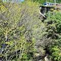 写真: 新緑の沿線(2)