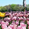 写真: 咲かせて桃色吐息