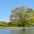 写真: 緑の小島