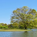 Photos: 緑の小島