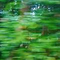 写真: 新緑の車窓(5)