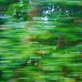 Photos: 新緑の車窓(5)