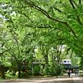 写真: 新緑の沿線(7)