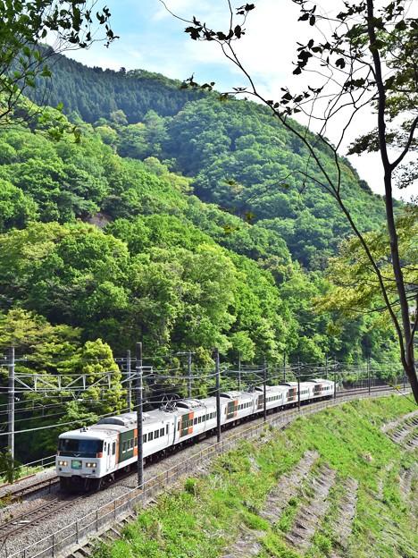 Photos: 新緑の沿線(8)