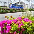 Photos: 道端のツツジ