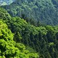Photos: 高尾の森