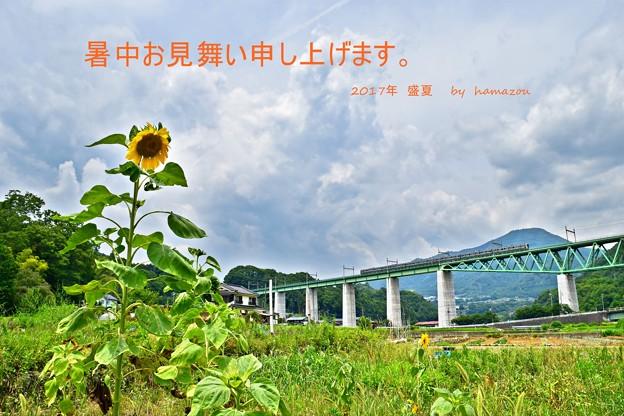 Photos: 暑中見舞(2017)